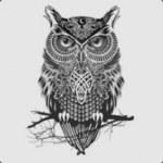 Owl Master